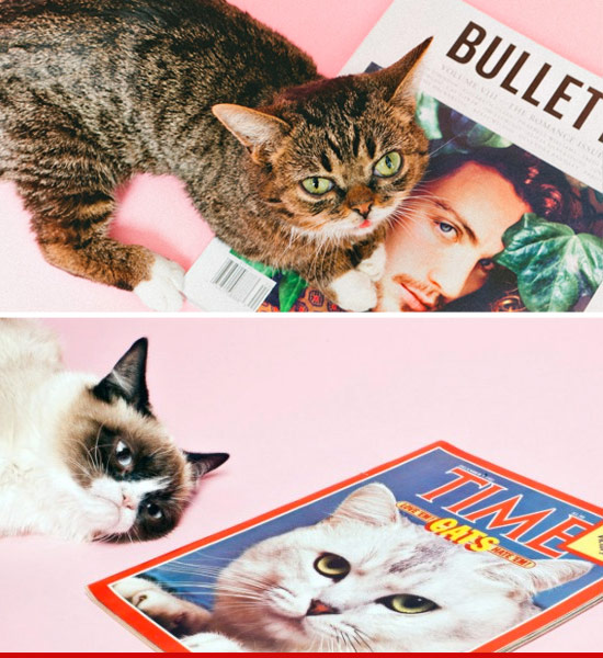 0329_grump_cat_bullet_article2