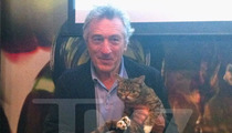 Robert De Niro -- Goodbye Mr. Jinx ... Hello Lil Bub