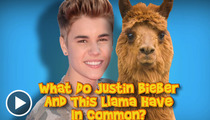 Justin Bieber -- What a Spit-Head (Allegedly)