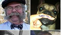 TMZ'S Movember Moustache Contest -- Lip Service