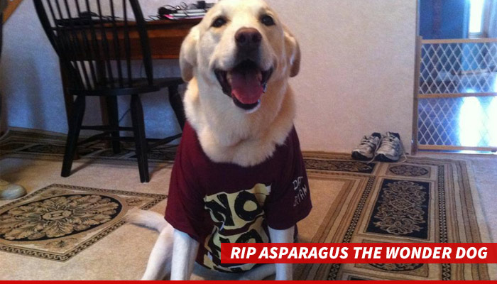 1123-rip-asparagus-wonder-dog