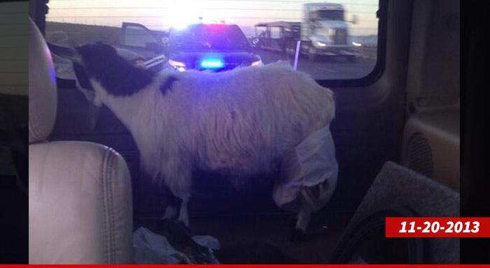 1201_goat_nevember