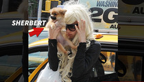 Amanda Bynes -- Gasoline-Soaked Pooch ... in a Better Place Now