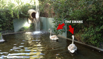 Lisa Vanderpump -- Rich People Problems ... MY SWAN HAS GONE MISSING!!