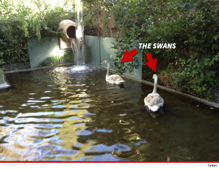 1224_lisa_vanderpump_swans_article_twitter