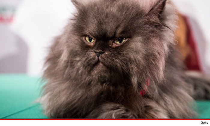 0131-colonel-meow-getty