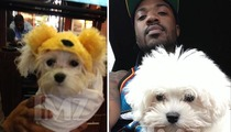 Ray J -- Breakup with Girlfriend Triggers MASSIVE Fight Over Miniature Dog