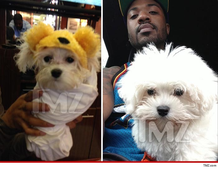 Ray J Dog Lost