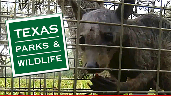 0404-chupacabra-texas-parks-and-wildlife-02