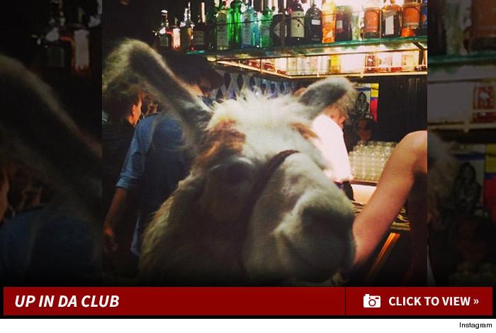 0414-llama-launch