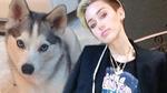 Miley Cyrus -- Death of Dog Triggered Illness Triggered Hospitalization
