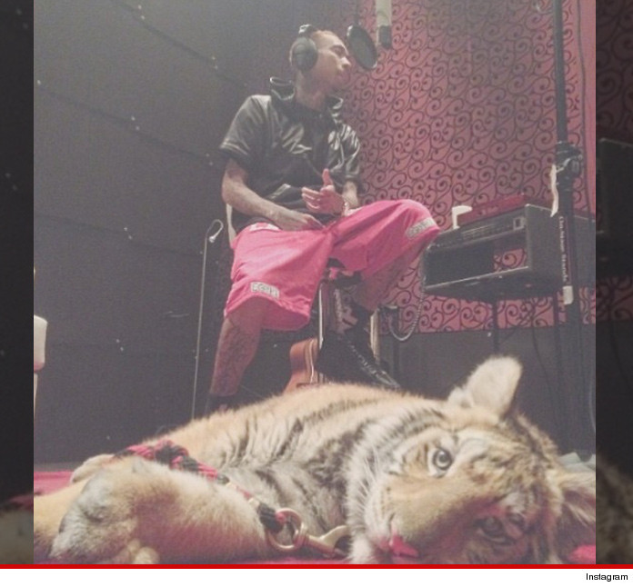 Tyga Tiger Confiscated