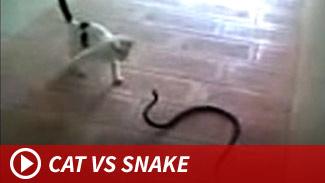 051414_cat_vs_snake_launch