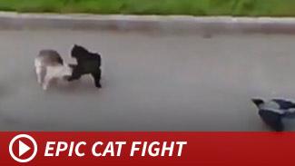051414_epic_cat_fight_launch
