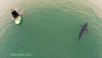 Great White Shark -- Captured on Drone Cam ... Swimming with Crazy Stand Up Paddlers!!