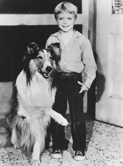 "Jon Provost became a child star after playing little Timmy Martin across from the iconic Long-Haired Collie in the late 50's television show ""Lassie."""