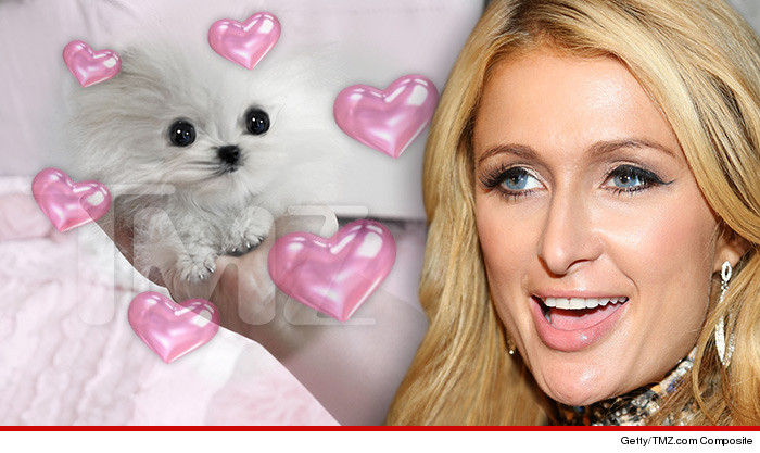 Paris Hilton New Dog