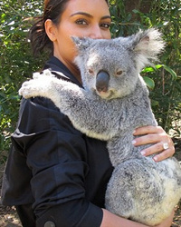 Kim Kardashian Cuddles a Koala at Australia Zoo -- See the Cute Pics!