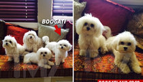 Ray J's Dog -- Boogati Back with His Bottom Bitch After Battling Depression