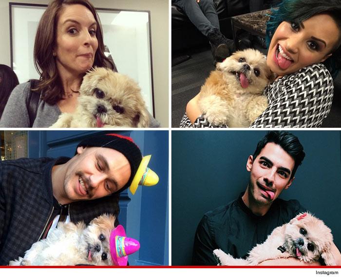 0116-SUB-celebrities-with-marnie-world-dog-awards-instagram-01