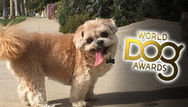 Marnie the Dog REJECTS World Dog Awards Invite ... I'm Too Famous, Bitches!