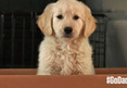 GoDaddy -- Pulls Super Bowl Spot ... Over Puppy Cruelty Back