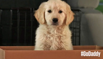 GoDaddy -- Pulls Super Bowl Spot ... Over Puppy Cruelty Backlash
