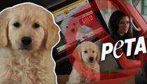 Super Bowl -- GoDaddy's Super Cute Puppy Can't Make the Cut (TMZ TV)