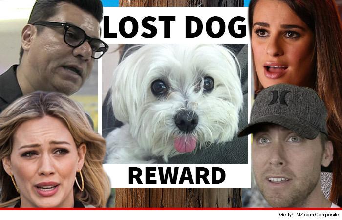 Dog Stolen Beverly Hills Store