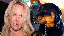 Pamela Anderson -- Ballistic Over Rick Salomon's Annulment Docs ... Dog is Now Missing