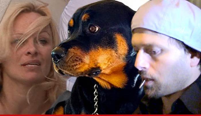 Pamela Anderson Dog Found