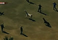 Arizona Llama Chase -- Potential Spit and Run ... On Live TV (VIDEO)