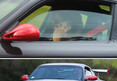 Bruce Jenner -- Lesson Not Learned ... Talking on Cell Phone While Driv