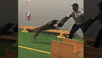 NFL Star Vernon Davis -- Training Attack Dogs!!