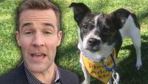 James Van Der Beek -- Wins Bidding War for Rescue Dog