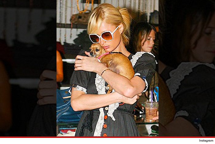 Paris Hilton   Sam Simon -- Beloved Dog Coping with Death Richard Simmons -- Beloved Dog's Death Triggered Emotional Crisis Justin Bieber's Hamster -- DEAD