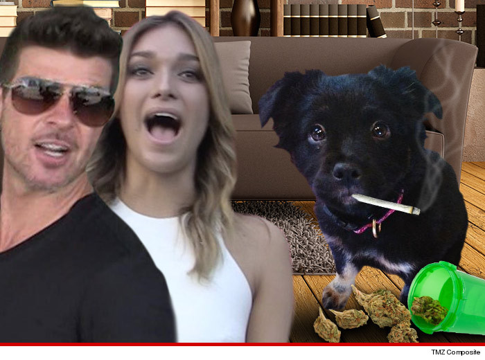 0516_robin_thicke_pot_dog