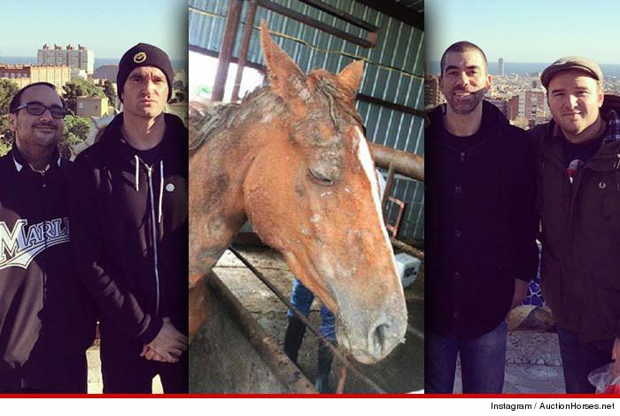 0527-newfoundglory-horse-2