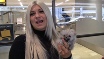 Kelly Osbourne -- How Her New Dog Got So Damn Small!!!