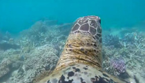Amazing Video of the Reef from A Sea Turtle's View!!