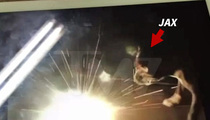 Jenelle Evans -- Sorry I'm Not Sorry About Explosive Video With My Dog