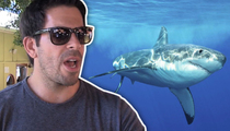 Shark Week's Eli Roth -- Key to Preventing Shark Attacks ... Sharknado 3?!! (TMZ TV)