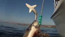 Frightening Video -- Great White Shark Tries To Jump On Boat