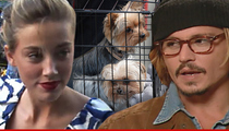 Amber Heard -- Charged With Dog Smuggling in Australia