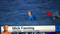 2 Great Whites Attack World Champion Surfer (VIDEO)
