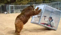 Grizzly Bear FLIPS Chick in a Glass Box!! (VIDEO)