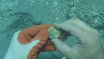 Deep Sea Treasure -- Diver Finds $1 Mil In Gold