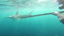 Intense Underwater Attack --  Divers Fend Off Shark With A Spear