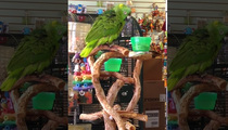 Singing Parrot -- EVERYTHING IS AWESOME