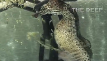 Insane Video of Seahorse Giving Birth